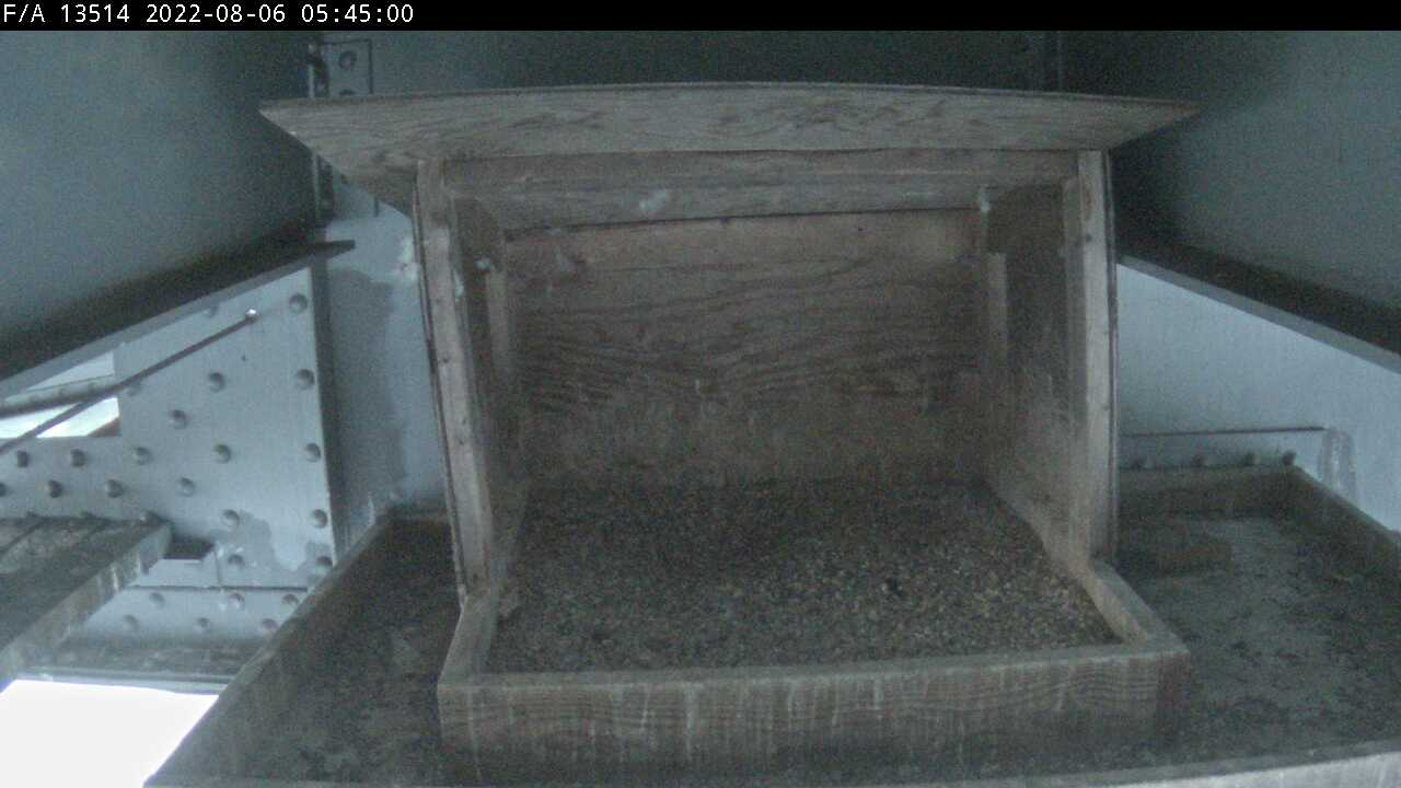 Current Image of Mid-Hudson Falcon Nest